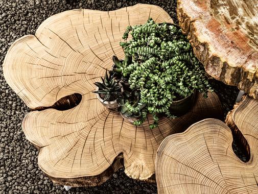 Muebles Janua en México - madera natural
